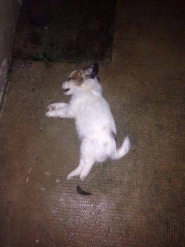 Il corpicino del cucciolo gettato dalla finestra (fonte: blitzquotidiano.it)