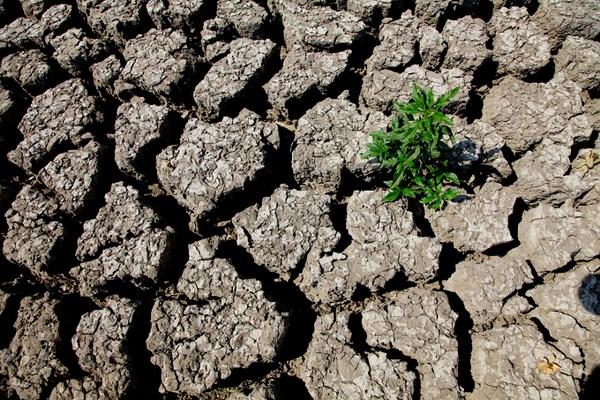 Si potrebbero registrare gravose riduzioni di acqua (fonte: ecologia.guidone)