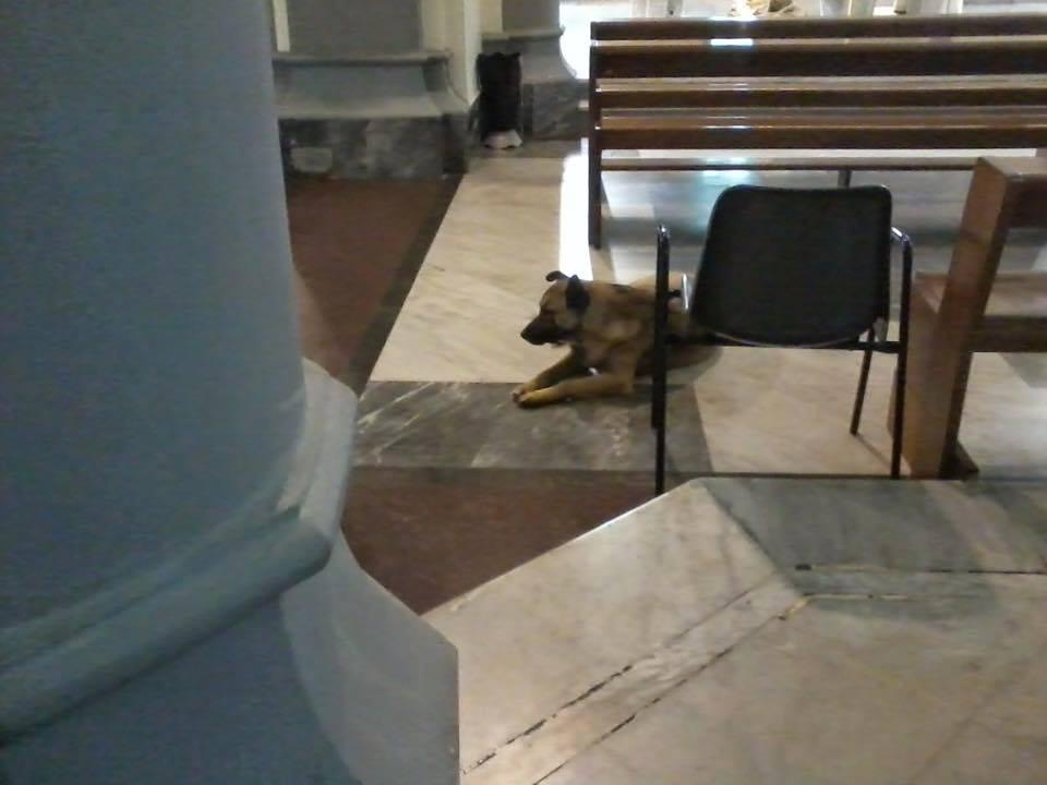 pippo-padre-francesco-cani-chiesa-messa-natale