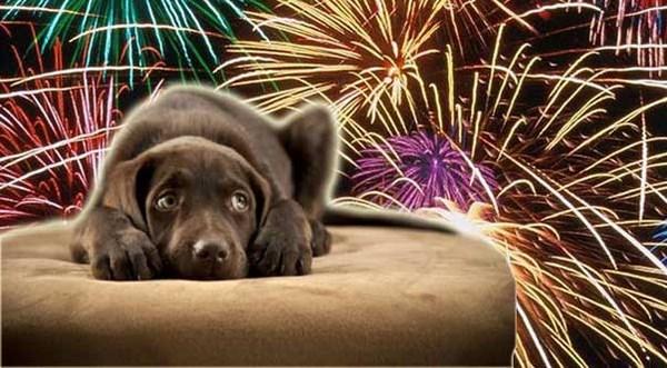 Come proteggere i cani dai botti di Capodanno (fonte: tipresentoilcane.com)