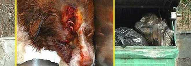 Il cagnolino ferito ritrovato in un cassonetto, all'interno di un sacchetto di plastica (www.leggo.it)