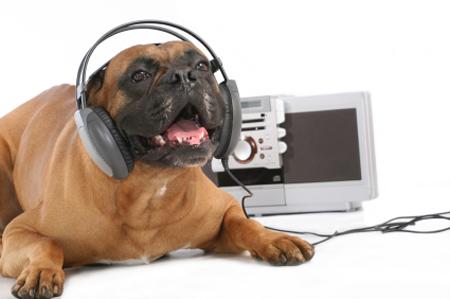 cane che ascolta musica