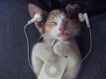 Gatto che ascolta musica
