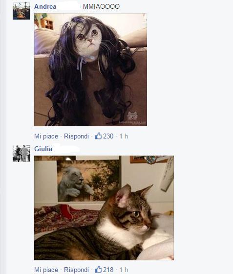 gattini su salvini