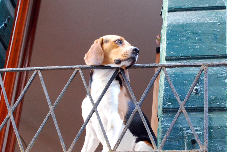 cane-terrazzo