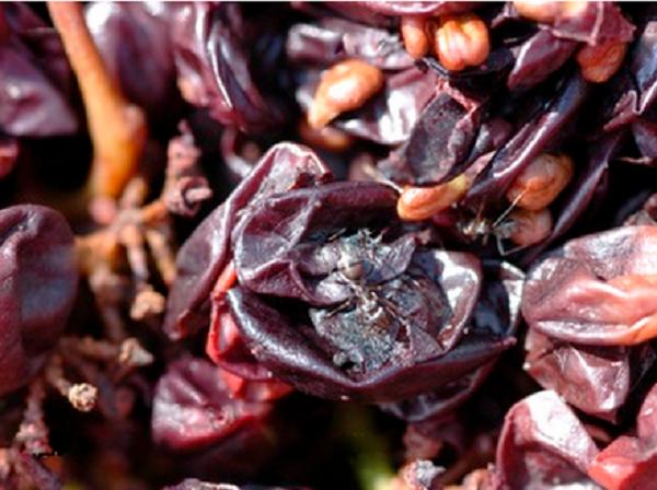 Scarti di fermentazione del vino (www.vasto24.it)
