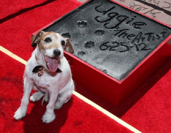 Uggie è stato il primo cane a ricevere una stella sulla Hollywood Walk of Fame (hellomagazine.com)