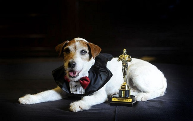 "Uggie, il cagnolino coprotagonista di ""The Artist"" (telegraph.co.uk)"