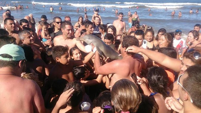 delfino morto per i selfie