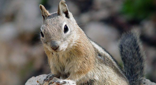 Squirri