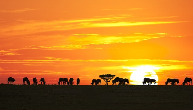 vacanza-in-africa