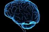 Cervello. Conscio e inconscio eseguono le stesse funzioni