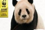 Wwf. Calendario Wildlife 2016: 12 mesi per le specie a rischio