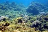 Oceani sempre più acidi: a rischio la vita degli animali marini