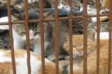 Cina: Mille gatti salvati dalle grinfie dei ristoratori