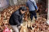 Hong Kong e l'influenza aviaria H7N9: il ritorno del pauroso virus