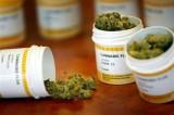 Cannabis terapeutica, via libera della Puglia