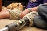 Pet Therapy: accesso per gli animali negli ospedali dell'Emilia Romagna
