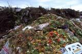 Stop agli sprechi alimentari. Basta al cibo che finisce nella spazzatura