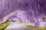 A passeggio tra la magia: i tunnel naturali più belli del mondo