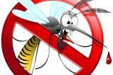 Punture di zanzare: rimedi naturali per allontanarle e lenire il prurito