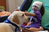 L'efficacia della Pet Therapy per i malati in ospedale