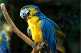 Usa: pappagallo torna a casa dopo quattro anni, ma parla spagnolo