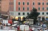 Maltempo a Roma, cade l'Alberone, simbolo di un quartiere