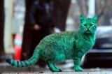 Svelato il mistero del gatto verde smeraldo avvistato in Bulgaria