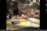 VIDEO Uomo si butta nella gabbia dei leoni allo zoo di Barcellona