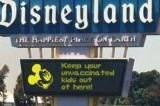 Il morbillo colpisce Disneyland: epidemia negli Usa