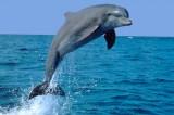 L'uomo che ha fatto sesso con un delfino: 'Colpa sua, mi ha sedotto'