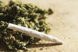 Giornata mondiale contro la droga: cannabis la più consumata in Europa