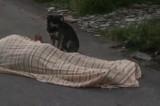 Pastore precipita e muore in montagna: il suo cane lo veglia per ore