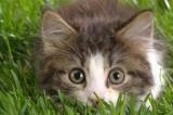 Guardare video con i gatti su internet fa bene: lo dice una ricerca