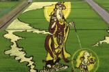 Giappone. Rice Field Art, quando le risaie diventano opere d'arte FOTO