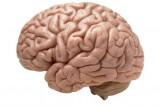 Uomo scopre di avere metà cervello