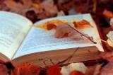 Letteratura&Co. I festival letterari di settembre