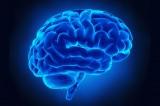 Cervello: le dimensioni non contano