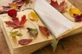 Letteratura&Co. I festival letterari di novembre