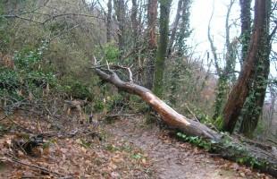 Albania, il parlamento vieta i tagli nelle foreste per 10 anni