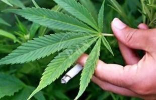 Ecco perché liberalizzare la cannabis, parla il presidente di FreeWeed