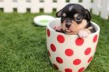 Come educare il cucciolo a fare i bisogni