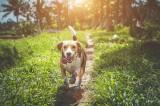 I migliori cani da caccia: scopri le razze per gli appassionati!